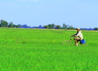 Life on the Rice Field (2383)